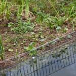 2011-06-environnement-la nature dnas ta ville-éducation-fontaine d'ouche-lac kir-JJ-dijonscope-19