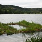 2011-06-environnement-la nature dnas ta ville-éducation-fontaine d'ouche-lac kir-JJ-dijonscope-49