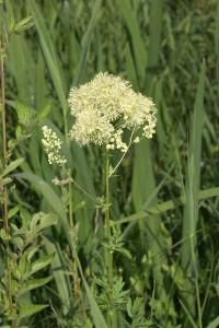 Herbier du lac Kir