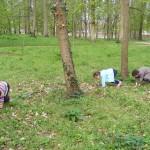 ecureuillon-marchant-sur-branche3