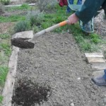 Incorporation du compost au jardin